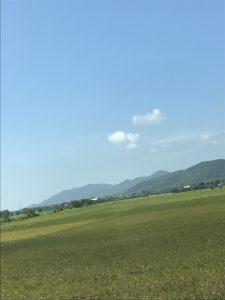 Những cánh đồng lúa xanh mơn mởn